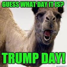 Camel Meme - camel imgflip