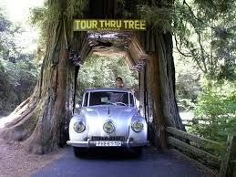 Chandelier Drive Through Tree Can You Drive Through A Tree Wonderopolis
