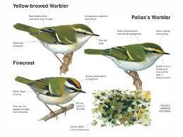 avibirds european birdguide online