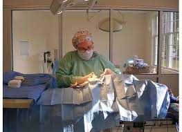 Surgical Gowns And Drapes Surgical Procedures Stratham Newfields Veterinary Hospital