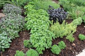 herbal garden herb gardening ideas and solutions the old farmer s almanac