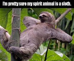 Funny Sloth Pictures Meme - this is not a drill sloth s are coming to the loveland living