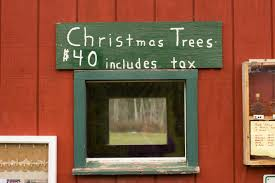 governor shumlin harvests office christmas tree vermont business
