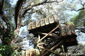 tree tops park mamaguru