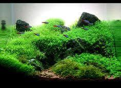 Aquascaping World Aquascape Pico Rock Outcrop Mostly Underwater Gardens Ponds