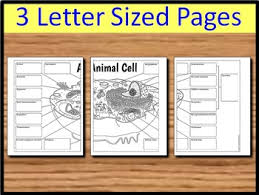 animal cell big foldable for interactive notebook or binder tpt