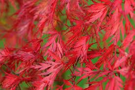 10 plants for autumn colour gardenersworld com