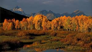 grand teton national park fall in jackson hole 6 things to do in grand teton national park