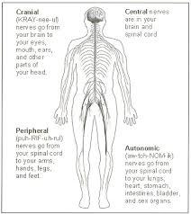 98 ideas nervous system coloring pages on www gerardduchemann com