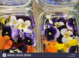 edible flowers for sale edible flowers for sale in sant josep market aka la boqueria