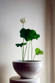 How To Revive Flowers In A Vase Grow Lotus Flower Water Lilies Ikebana And Water