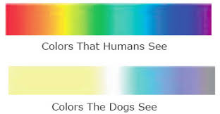 Are All Dogs Colour Blind Through The Eyes Of Your Dog