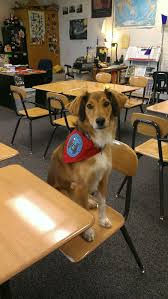 ptsd service dog have husky will travel