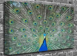 peacock bathroom ideas the 25 best peacock themed bathroom ideas on peacock
