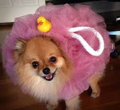 Cute Dog Halloween Costumes 25 Funny Dog Costumes Ideas Funny Dog