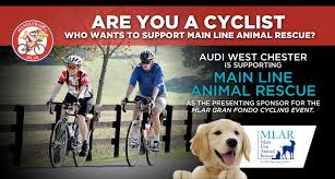 audi westchester mlar gran fondo cycling event audi dealer in chester pa