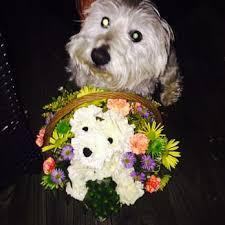 Dog Flower Arrangement Flowers Of Charlotte 37 Photos U0026 21 Reviews Florists 800