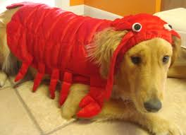 lobster halloween costumes happy halloween the kona breeze