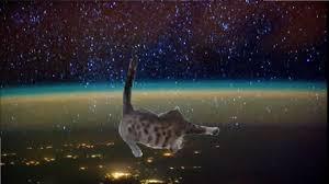 Gato Meme - shooting stars meme gato caindo youtube