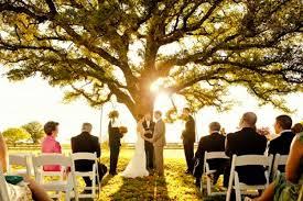 wedding backdrop tree big tree small wedding