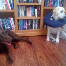 dog and hardwood floors south bay carpets and hardwood floors inc 25 photos u0026 68