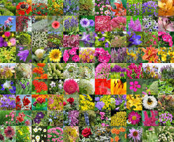 the blossoming ornamental plants of a garden u2014 stock photo