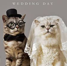 Wedding Day Cards From Groom To Bride Wedding Day Congratulations Card Funny Bride U0026 Groom Cats Luxury