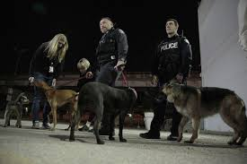 van carrying 16 stolen dogs found say toronto police toronto star
