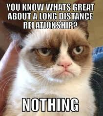 Distance Meme - my favorite grumpy cat memes distance long distance and distance