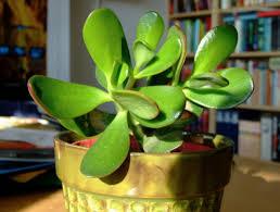 9 low maintenance plants for the office inhabitat green design