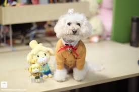 Halloween Animal Crossing by Animal Crossing Dog Costume Acnl Dog Cosplay Isabelle Animal