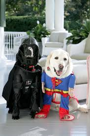 one out of two pets wear halloween costumes cbs detroit