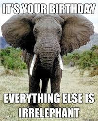 Elephant Meme - 46 best elephant pics images on pinterest elephant elephant