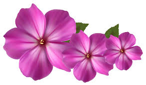 Flower by Pink Flower Images Free Download Clip Art Free Clip Art On