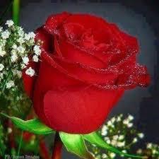 i roses flowers home