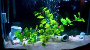 marineland aquatic plant led lighting system w timer 48 60 marineland double bright led fixture 36 48 review youtube