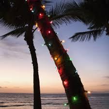 palm tree christmas tree lights palm tree lights near the beach florida the sunshine state
