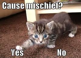 Kittens Memes - cat memes 25 ways to laugh cattime