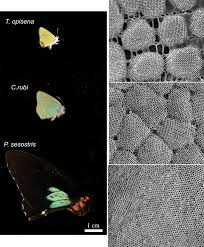 high resolution images of butterfly wing crystals offer clues to