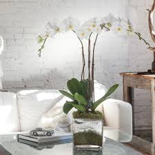 white orchids orchid arrangement delight with white orchids orchid