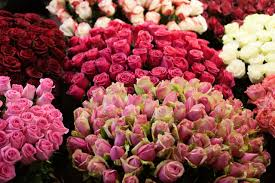 florists in florists in kinston nc the free press