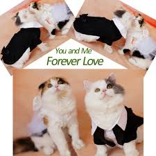 Halloween Cat Fabric Amazon Com I U0027pet Handsome Prince Cat Bridegroom Wedding Tuxedo