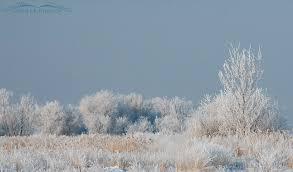 frosty trees at farmington bay mcpherson s on the wing