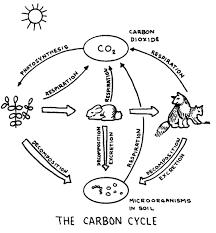 biogeochemical cycling webquest nitrogen and carbon my a p e s