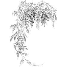 wisteria illustration google search florals pinterest