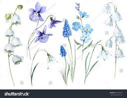 spring flower watercolor floral set spring flower lily stock illustration