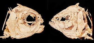 Big Blind Small Blind Rules How Do Blind Cavefish Find Their Way The Answer Could Be In Their
