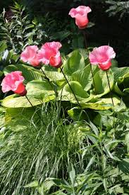4882 best junk yard art images on pinterest gardening diy and