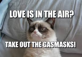 Meme Angry Cat - 32 funny angry cat memes for any occasion freemake