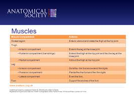 Knee Compartments Anatomy Anatomical Society Is A Registered Charity No And Limited Company